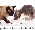 two cats eating from same feeding bowl 40846424