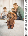 Pretty dachshund dog resting on floor near man and boy 40856550