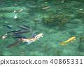 기후현 세키시 모네의 연못 40865331