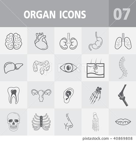 Human Anatomy Outline Icons Stock Illustration 40869808 Pixta