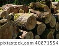 장작 직화 나무 그루터기 40871554