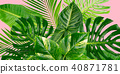 Tropical green leaves 40871781