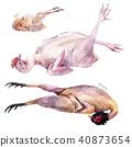 肉 鸡 鸡肉 40873654