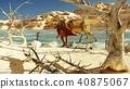 3D rendering scene of the giant dinosaur 40875067