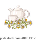 chamomile tea illustration 40881912