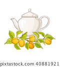 apricot, fruit, fresh 40881921