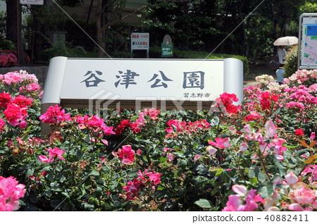 Yatsu Park Chiba Prefecture Narashino City 40882411