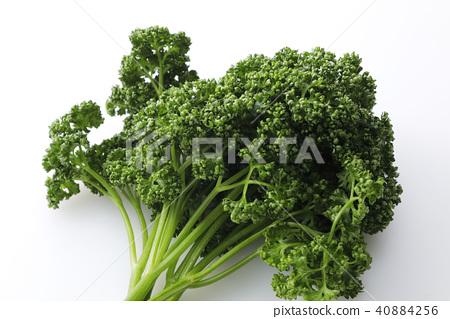 parsley 40884256