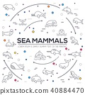 Sea mammals animal thin lines collection icons  40884470