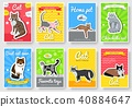 Breed cats vector set. Cute animal template  40884647