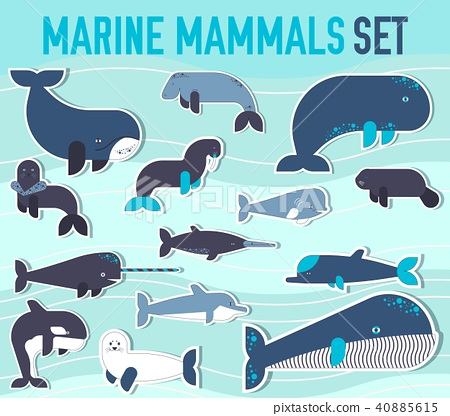 Sea mammals animal collection icons set.  40885615