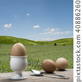 egg, eggshell, teaspoon 40886260