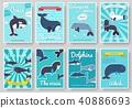 amazon, bottlenose, dolphin 40886693