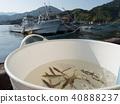 ปลา,ตกปลา,ฤดูร้อน 40888237