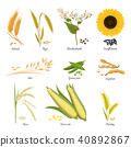 food, vector, wheat 40892867