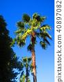 palm, wood, arboreal 40897082