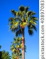 palm, wood, arboreal 40897083