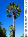 palm, wood, arboreal 40897084