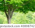公園樹 40898742