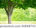 公園樹 40898743