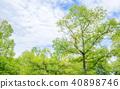 신록의 나무와 하늘과 구름 40898746