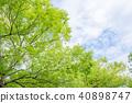 신록의 나무와 하늘과 구름 40898747