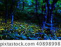 firefly, lightning bug, night 40898998