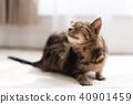Itch cat 40901459