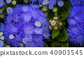 cactus plant vegetative 40903545
