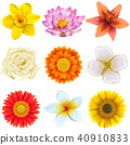Vector Flower Icons Set 2 40910833