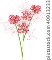 피안 꽃 40913233