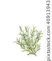 botanic, botanical, vegetative 40913943