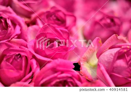 玫瑰情人節台灣士林官邸花獎花花束玫瑰 40914581