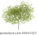 tree isolated background 40915357