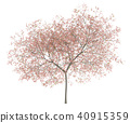 flowering peach tree isolated on white background 40915359
