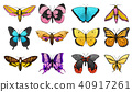 vector butterfly fly 40917261