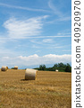 Wheat field with reaping and cotton rolls 40920970