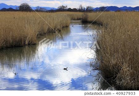 河畔之旅 河邊地區 近江八幡 40927933
