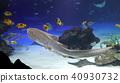 수족관, 아쿠아리움, 물고기 40930732