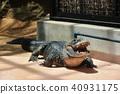 鱷魚 餵養 贖 40931175