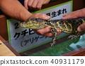 鱷魚 接觸 撫摸 40931179