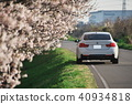 왕 벚나무와 BMW 40934818