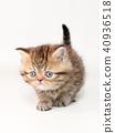 小猫 猫咪 猫 40936518
