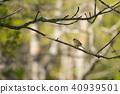森林公園Aoji 40939501