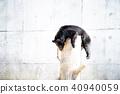 곰, 동물, 육상동물 40940059