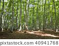 숲, 비진바야시, 풍경 40941768