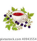 blackberry tea illustration 40943554