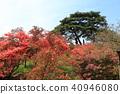 Tatebayashi Azagaoka公園杜鵑花 40946080
