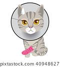 Cat Broken Leg 40948627