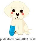 Dog Broken Leg 40948630